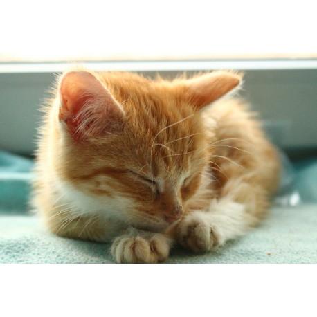 http://www.catapart.fr/conseils-comportementaux/10080-pourquoi-les-chats-ronronnent.html